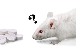 white mouse looking at pills